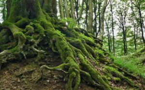 Forest Bathing - Medicine for Mental Health